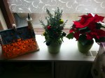 Current Christmas decorations. A replica of city hall, a small Christmas tree and a poinsettia, I love those!